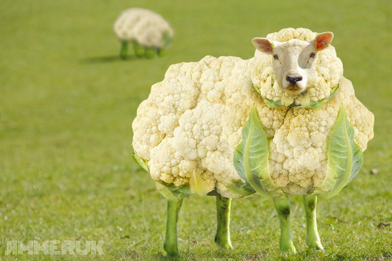 Caulisheep